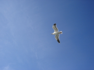 white-bird-flying